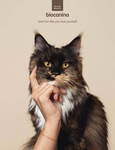 пример хорошей рекламы с котиком